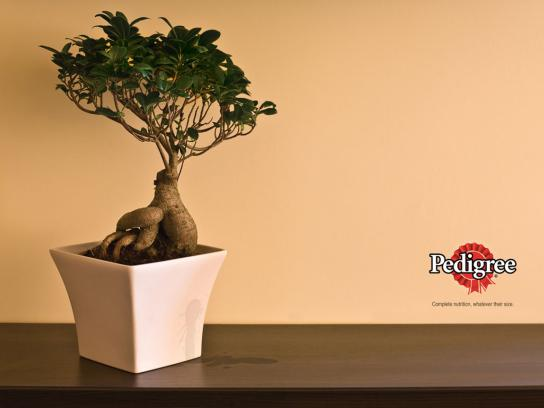 Pedigree Print Ad -  Bonsai