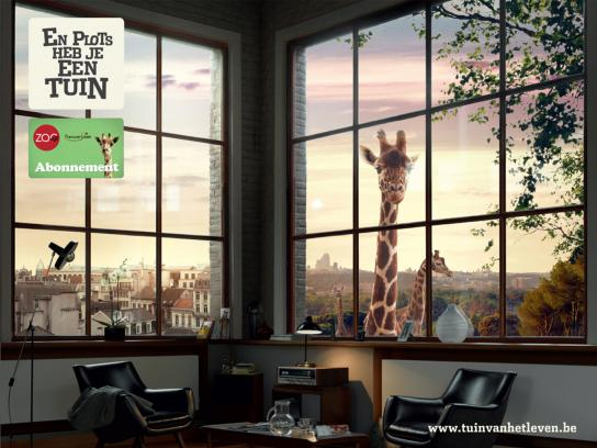Antwerp Zoo Print Ad -  Giraffe