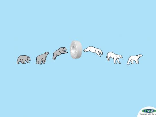 Polo Print Ad -  Polar bear
