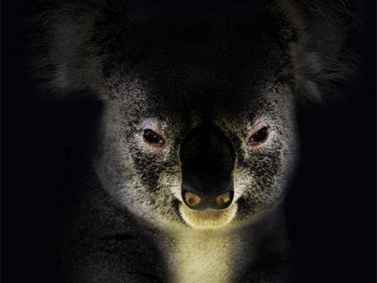 San Francisco Zoo Print Ad -  Koala