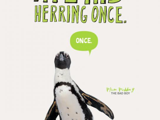 New England Aquarium Print Ad -  Another bird