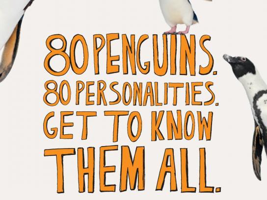 New England Aquarium Print Ad -  80 penguins
