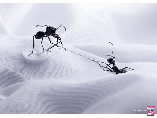 Surf Print Ad -  Ants