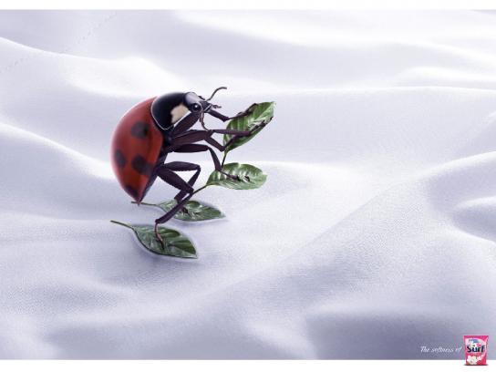Surf Print Ad -  Ladybug