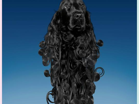 Vitakraft Print Ad -  Sweet black dog
