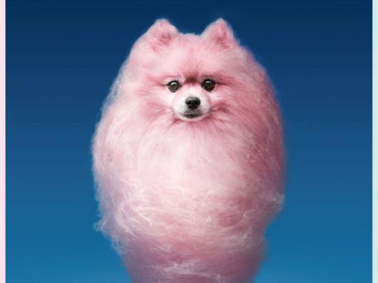 Vitakraft Print Ad -  Sweet pink dog