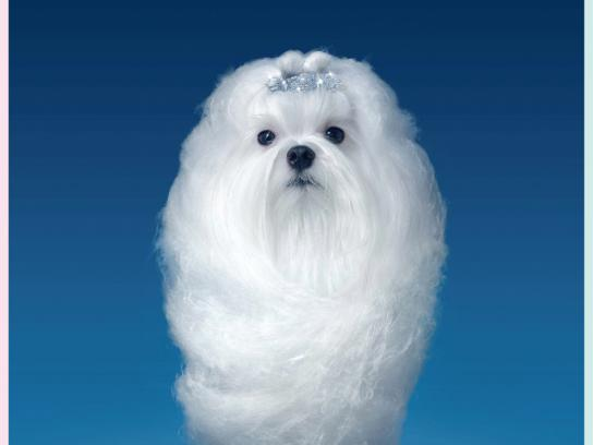 Vitakraft Print Ad -  Sweet white dog