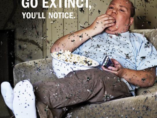 Vancouver Aquarium Print Ad -  Couch
