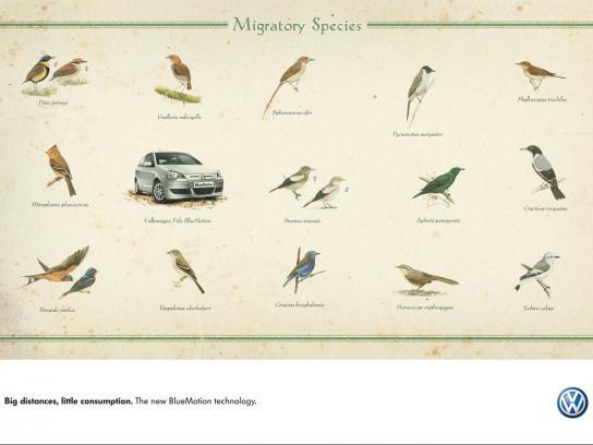 Volkswagen Print Ad -  Migratory Species