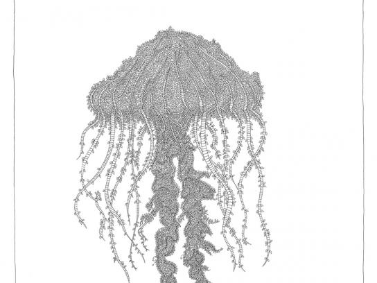 WWF Print Ad -  Jellyfish