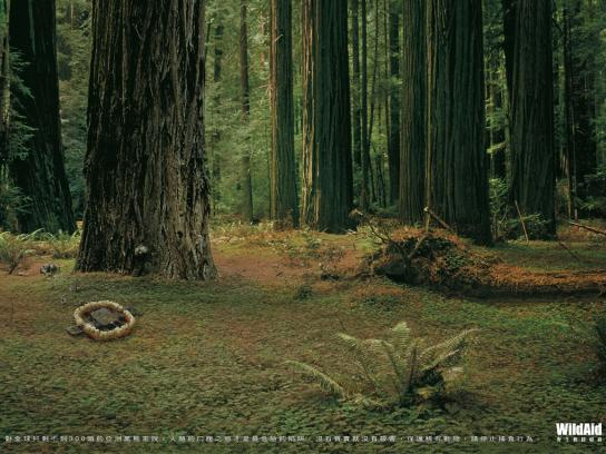 WildAid Print Ad -  Black Bear