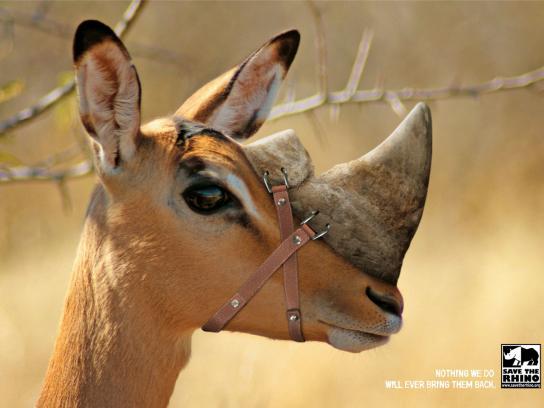 Save the Rhino Print Ad -  Springbok