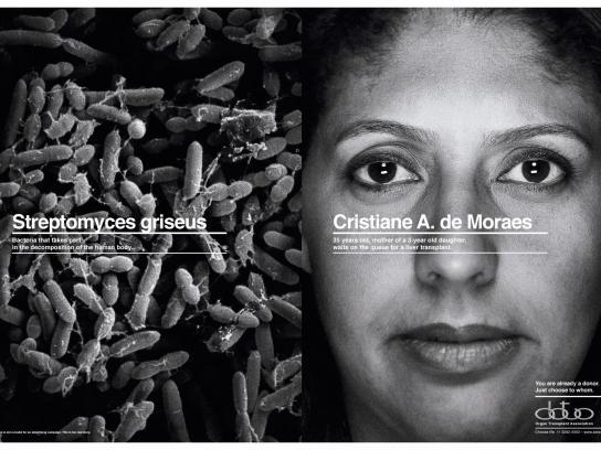 ABTO Print Ad -  Choices, Streptomyces
