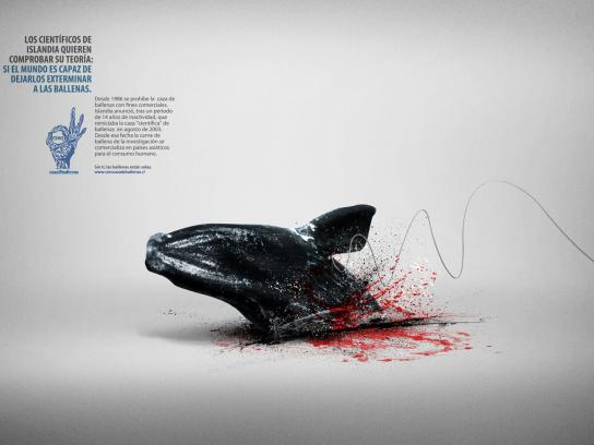 Cero Caza De Ballenas Print Ad -  Whale, 2