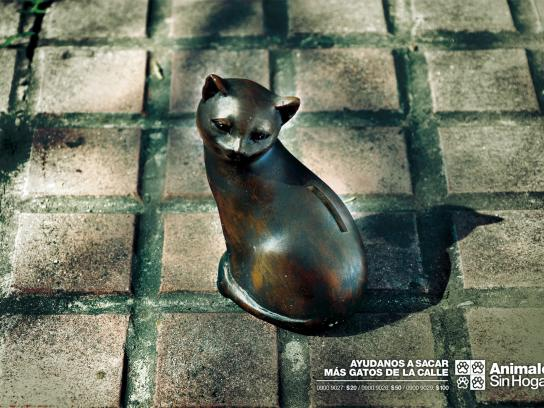 Animales Sin Hogar Print Ad -  Donations, Cat