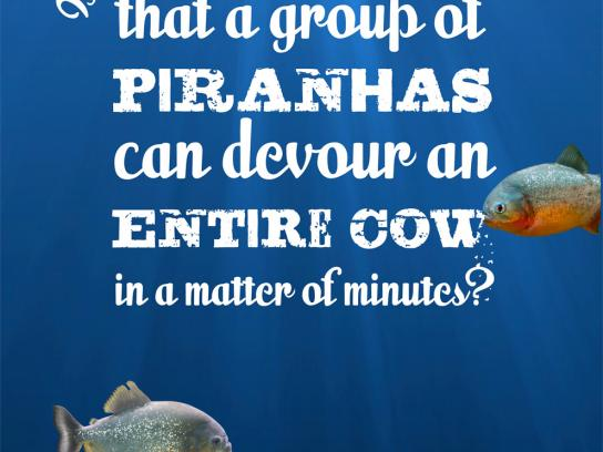 Aquaria Watermuseum Outdoor Ad -  Wet facts, Piranha