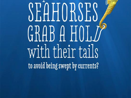 Aquaria Watermuseum Outdoor Ad -  Wet facts, Seahorse