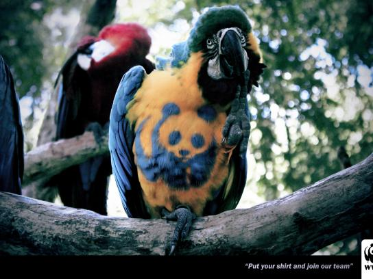 WWF Print Ad -  Arara