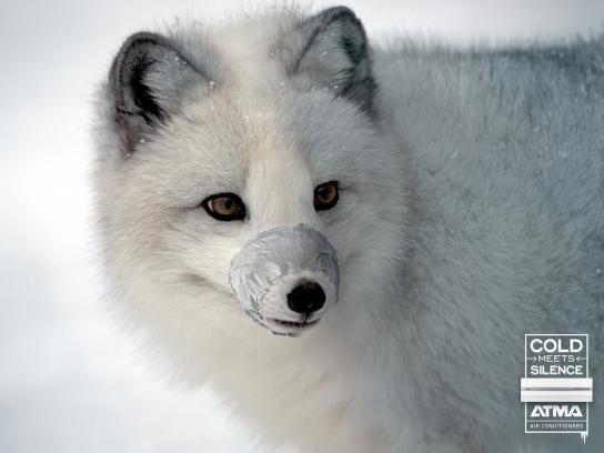 Atma Print Ad -  Arctic fox
