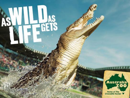 Australia Zoo Print Ad -  Croc