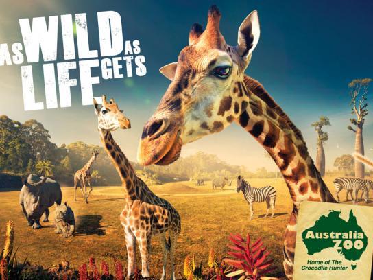 Australia Zoo Print Ad -  Giraffes