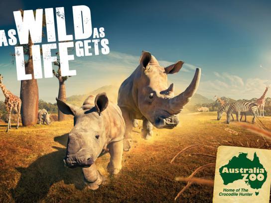 Australia Zoo Print Ad -  Rhino