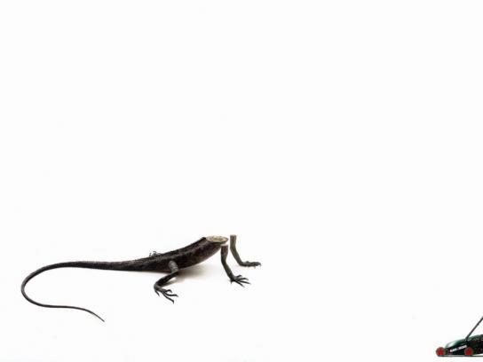 Black&Decker Print Ad -  Lizard