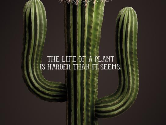 Vigorplant Print Ad -  Cactus