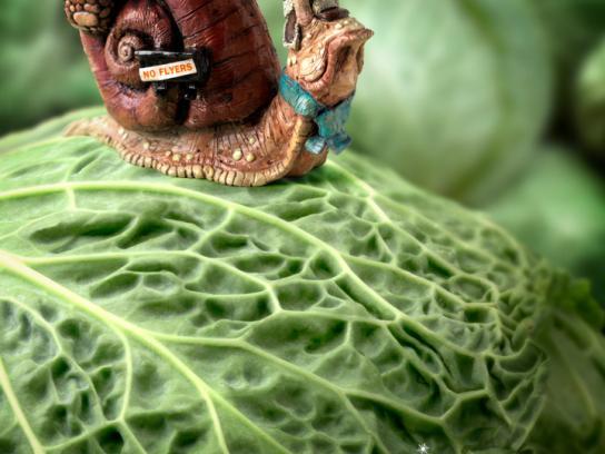 Calgary Farmers' Market Print Ad -  Cabbage