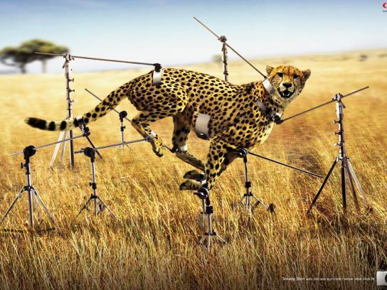 Canon Print Ad -  Cheetah