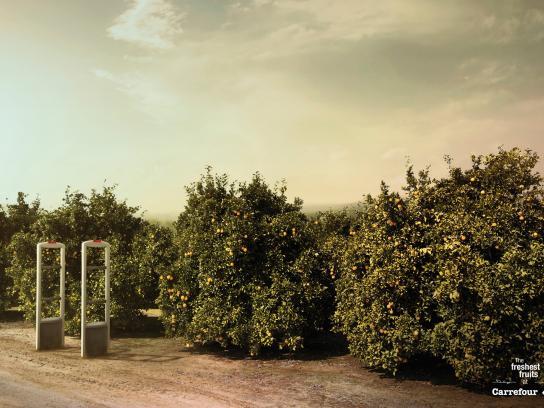 Carrefour Print Ad -  Oranges