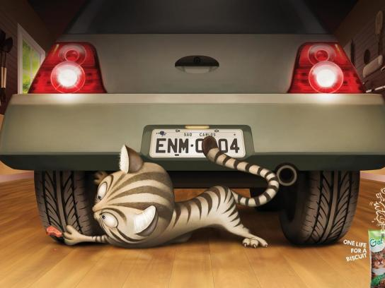 Gatos Print Ad -  Car