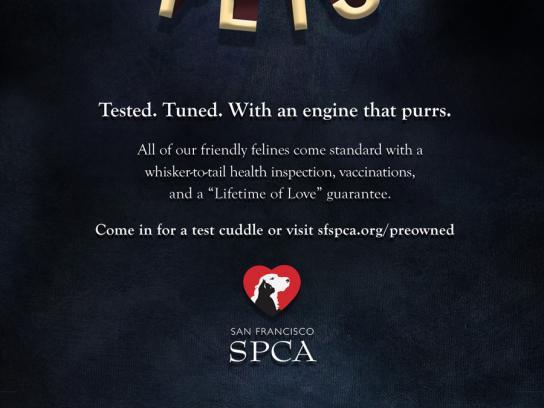 SPCA Print Ad -  Certified Pre-Owned, Cat