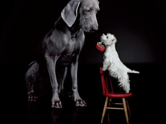 Cesar Print Ad -  Merry Woof