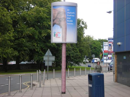 Chester Zoo Ambient Ad -  Elephant