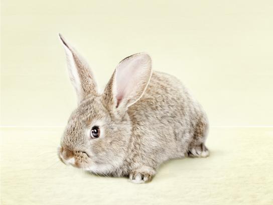 Chofitol Print Ad -  Digestivo Natural, Bunny