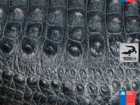 Zoologico Nacional Print Ad -  Crocodile