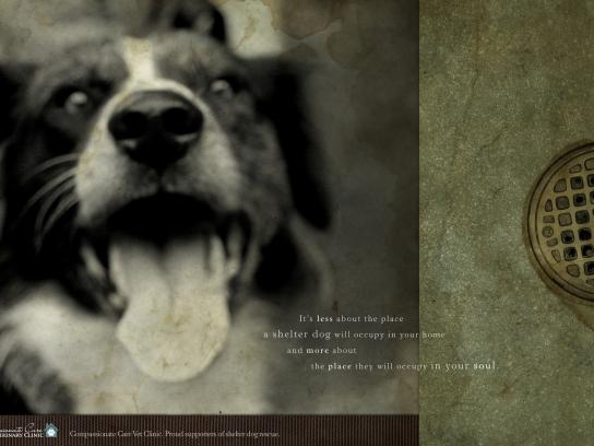 Compassionate Care Veterinary Clinic Print Ad -  Shelter dog, 3