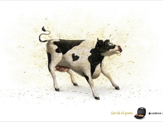 Cadence Print Ad -  Cow