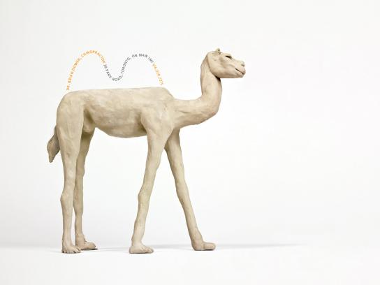 Dr. Brian Dower Print Ad -  Camel