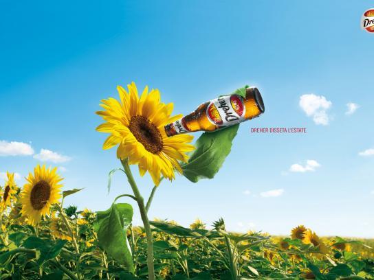 Dreher Print Ad -  Sunflower