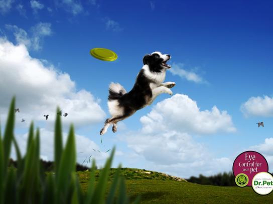 Dr. Pet Print Ad -  Frisbee