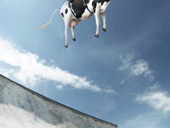 Micro X-treme Print Ad -  Cow