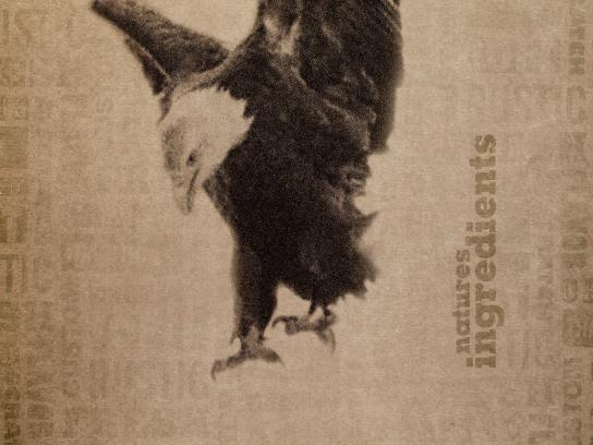 Madison Sourdough Print Ad -  Eagle