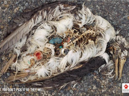 Endangered Wildlife Trust Print Ad -  Ball