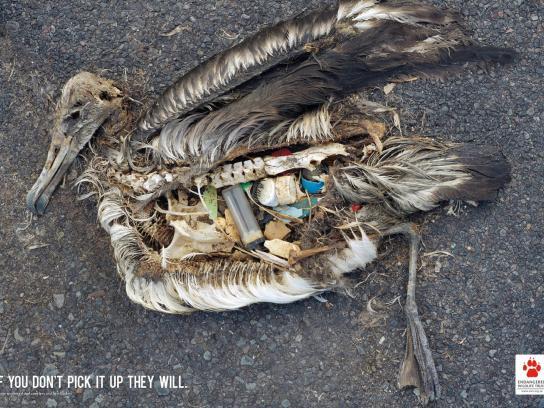 Endangered Wildlife Trust Print Ad -  Lighter