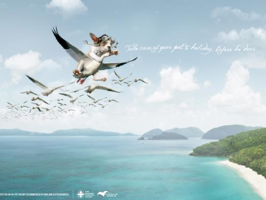 ENPA Print Ad -  Flying dog