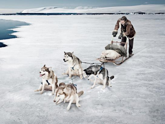Exelpet Print Ad -  Sled dogs