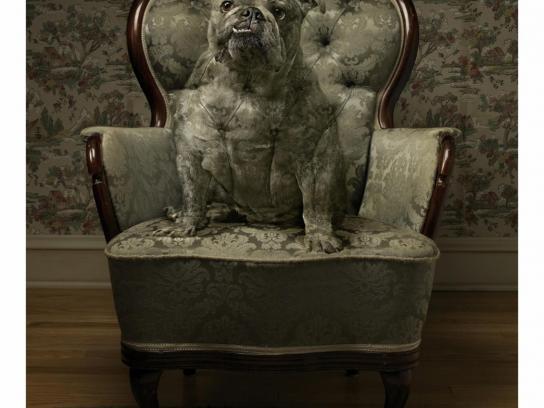 Febreze Print Ad -  Grandma's Dog