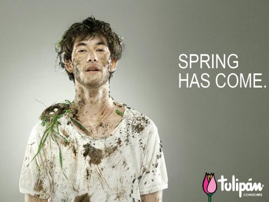 Tulipan Print Ad -  Knocked down, 3